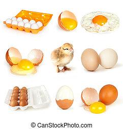 ovos, cobrança, isolado, branca