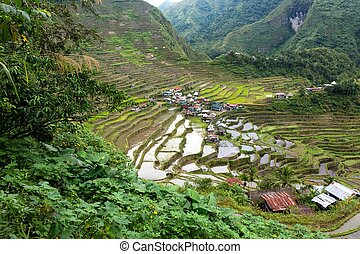 Rice fields terraces in Philippines - Famous rice fields...