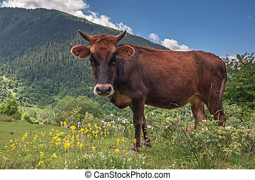 cow - red cow on green field