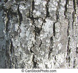 The texture. Birch