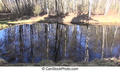pond in spring morning forest