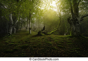 Deep forest - Life and death in the green forest of beech