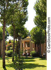 Lawn with pines in front of a house