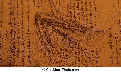 Anatomy?art