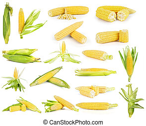 Corn on a white background