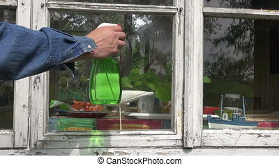 cleaning window in farm house - cleaning old window in farm...