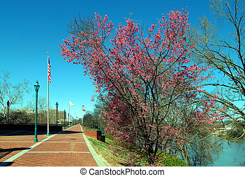 Augusta Riverwalk - Views from the riverwalk in Augusta,...