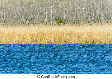 Lake - View Of The Lake With Reeds And The Forest On The...