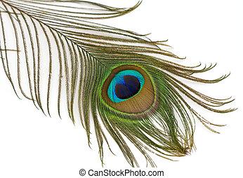 美麗, 孔雀, 羽毛