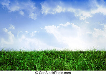 Field of grass under blue sky - Digitally generated field of...