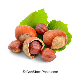 Hazelnut - a filbert Isolated