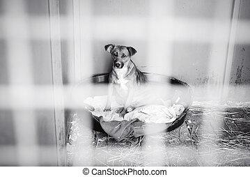 perro, jaula