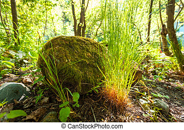 big rock with grass growing around at forest - Photo of big...