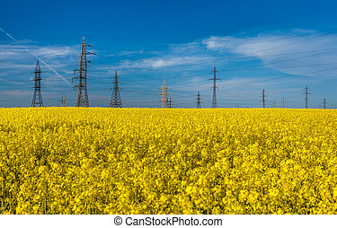 photo of electric towers in rapeseed against blue sky -...