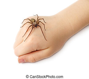 Spider on the children fist isolated on white background