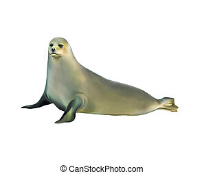 harp seal isolated on white background