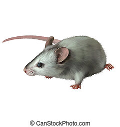 Cute gray mouse isolated on white background