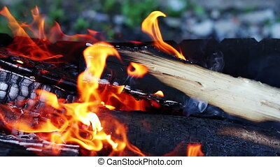 Flame of fire - Burning wood in the campfire