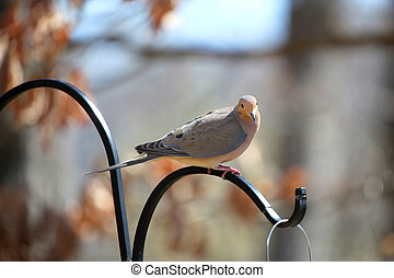 Morning Dove - Morning dove on the bird feeder pole