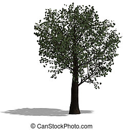 3D Render of a broadleef Tree with shadow and clipping path...