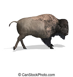 Wild West Bison - Wild Bison with horns and fur over white...
