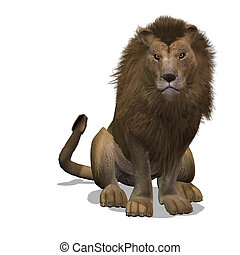 Big Cat Lion Male - Dangerous Big Cat Male Lion With...