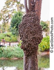 Termit, gniazdo, drzewo, Park, SI, swoja, Ket, Tajlandia