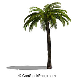 3D Render of a palm tree with shadow and clipping path over...