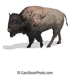 Wild West Bison - Wild Bison with horns and fur over white....