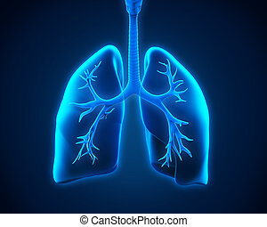 Lung and Bronchi - Illustration of Lung and Bronchi 3D...
