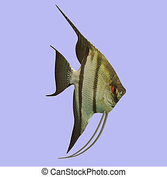 Scalar Fish in water With Clipping Path