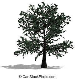 3D Render of a needle beam Tree - 3D Render of a bradleaf...