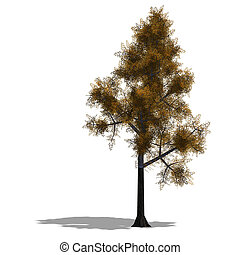 broadleef Tree - 3D Render of a broadleef Tree with shadow...