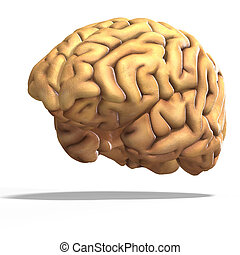 human brain - schematic render of a brain with clipping path