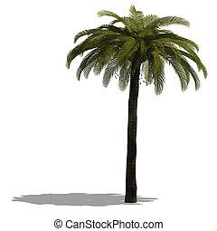 Images et illustrations de faon 776 illustrations de faon for Plante yucca chat
