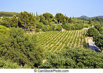 Vineyard of Le Castellet In France - Vineyard of Le...