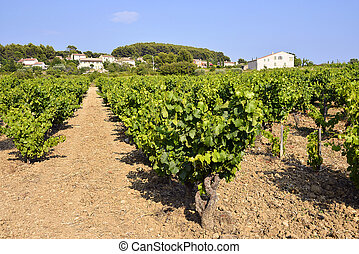 Vineyard of Le Castellet In France - Vineyard of Le...