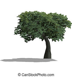 apple tree - rendering of a tree with shadow and lipping...