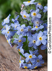 bouquet of blue flowers forget-me-not closeup on wooden...