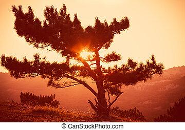 Lonely Tree on Mountain Beautiful Sunset Landscape