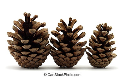 Pine cones - Three pine cones on white background