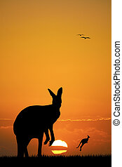 kangaroos at sunset - kangaroos silhouette at sunset