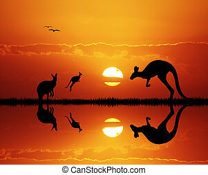 kangaroos at sunset - illustration of kangaroos at sunset