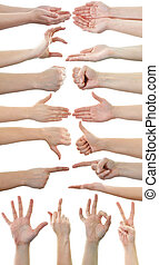 Set of many different hands over white background - Set of...