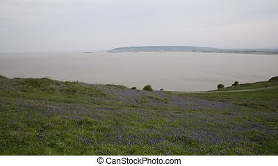 Bluebells and Weston-super-mare bay - Bluebells at Brean...