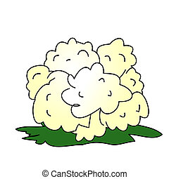 Cauliflower - Childish Illustration Isolated Vector...