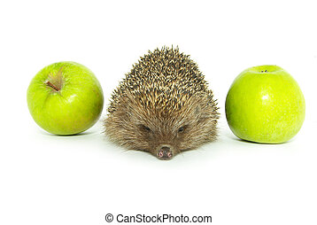 hedgehog and apple isolated on white
