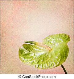 Shabby Chic Background with flamingo flower