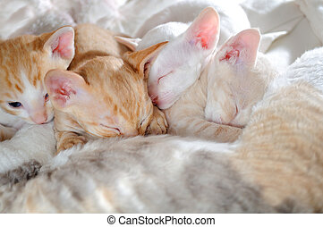 Baby Kittens Sleeping with their Mother - Four cute baby...