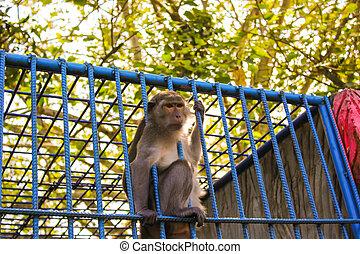 monkey in the cage, animal zoo